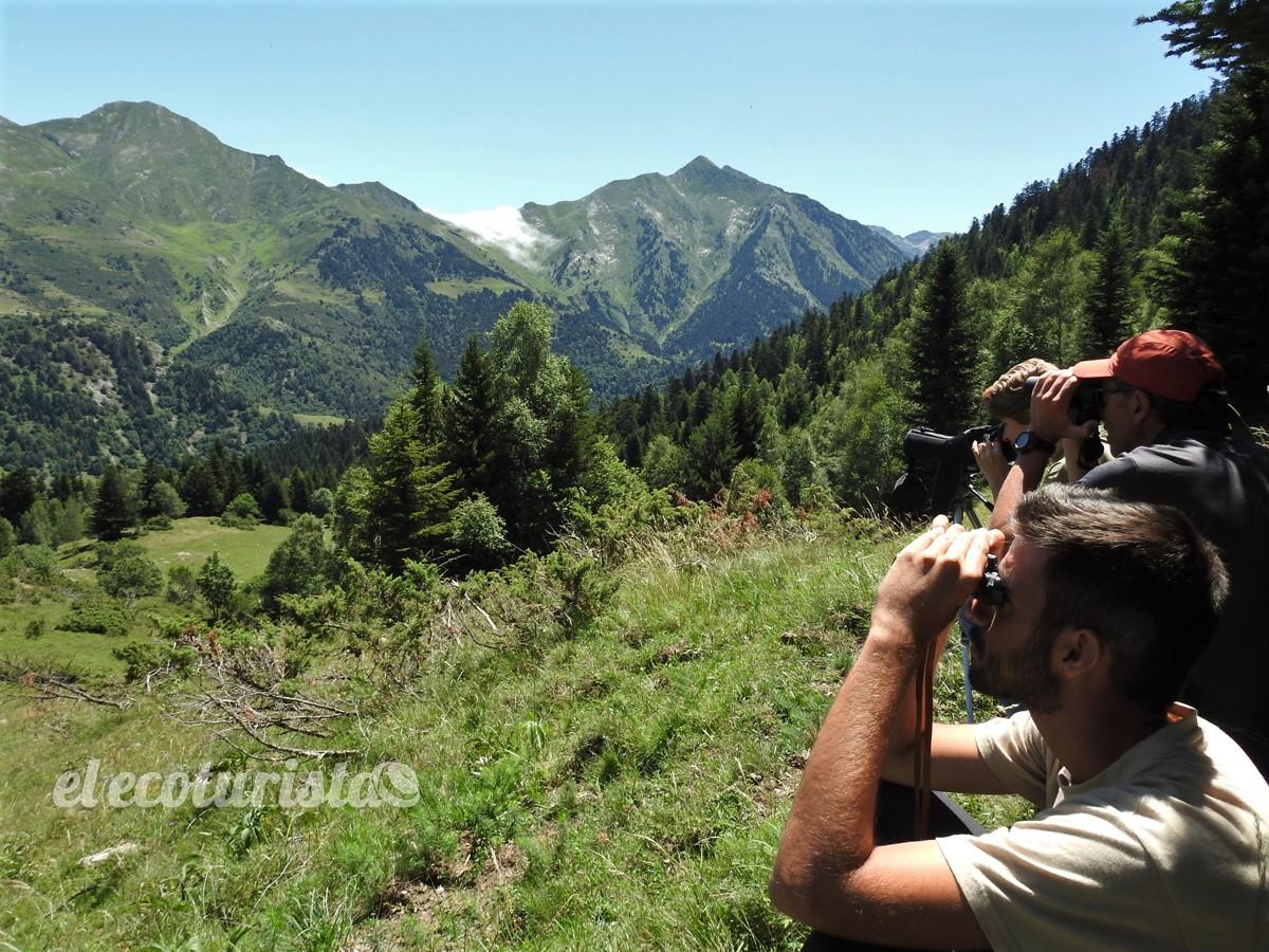 """alt=""""Observación oso pardo en Pirineos"""""""