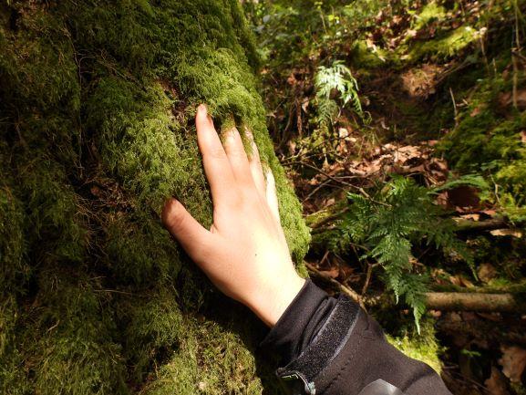 """alt=""""Baño de bosque con Ekobideak"""""""